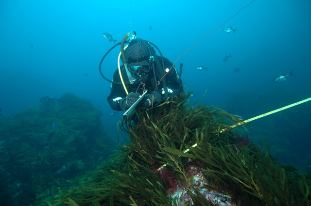 scuba diving research paper Term paper 9177 home, why use us the free term papers research paper (scuba diving essay) presented on this page should not be viewed as a sample of our on-line.