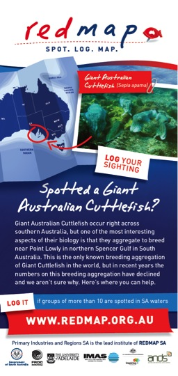 REDMAP Australian Cuttlefish
