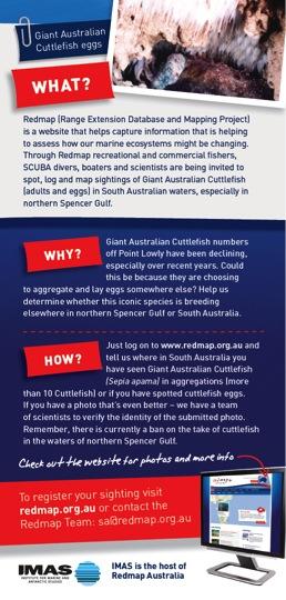 REDMAP Australian Cuttlefish2
